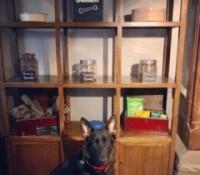 Shackleford dog walk and dog-friendly pub, Surrey - dogwalks and dog-friendly pubs-Surrey.jpg