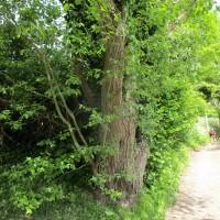 A438 dog-friendly pub and dog walk near Ledbury, Herefordshire - dog-friendly pubs and dog walks herefordshire.JPG