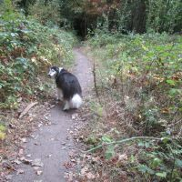 A4 dog friendly pub and dog walk near Hungerford, Berkshire - Berkshire dog walk and dog friendly pub