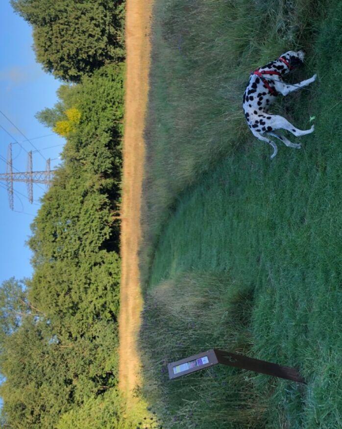 Feels like you are in the countryside - Banbury, Oxfordshire - Dog walk near Banbury.jpeg