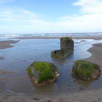 Reighton Sands dog-friendly beach, Yorkshire - Yorkshire dog-friendly beaches and dog walks