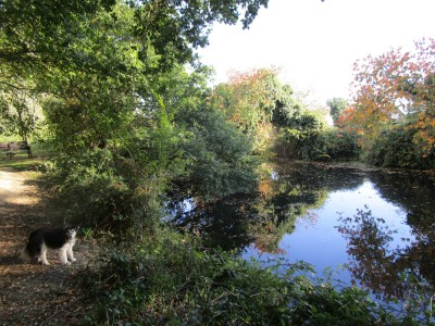 West Hythe dog walk, Kent - Driving with Dogs