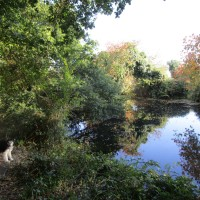 West Hythe dog walk, Kent - Kent dog walks and dog-friendly pubs