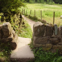 Wheata Woods dog walk, Sheffield, Yorkshire - Dog walks in Yorkshire