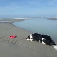 Cayeux-sur-Mer dog-friendly beach, France - Image 3