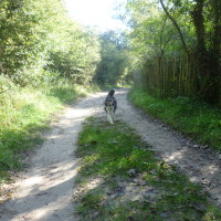 A stroll with the dog on L'Authie Nature Trail, France - Image 1