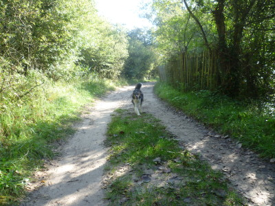 A stroll with the dog on L'Authie Nature Trail, France - Driving with Dogs