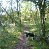A stroll with the dog on L'Authie Nature Trail, France - Image 3