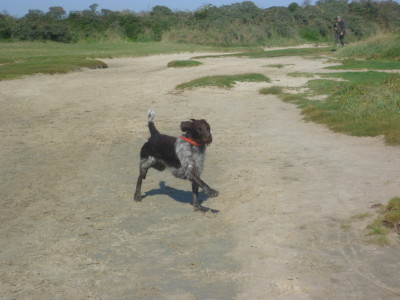 A16 exit 25 dog walk near Fort Mahon, France - Driving with Dogs