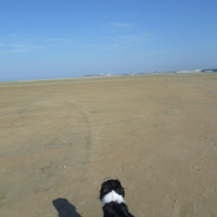 A16 exit 25 dog walk near Fort Mahon, France - Image 2