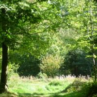 A26 exit 2 Forest dog walk, France - Image 2