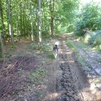 A26 exit 2 Forest dog walk, France - Image 3