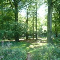 A26 exit 2 Forest dog walk, France - Image 4
