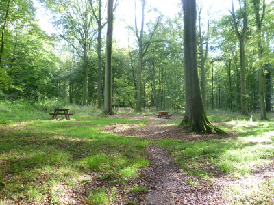 Forest of Hesdin dog walks, France - Driving with Dogs