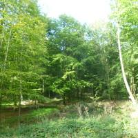 Forest of Hesdin dog walks, France - Image 2