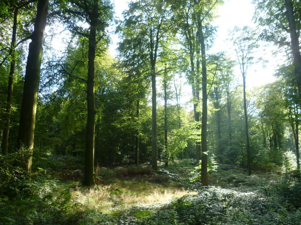 Forest of Hesdin dog walks, France - Image 3