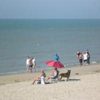 Opal coast dog-friendly beach near Cucq, France - Image 1