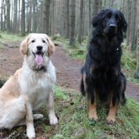A93 dog walk at Crathes Castle, Scotland - Dog walks in Scotland
