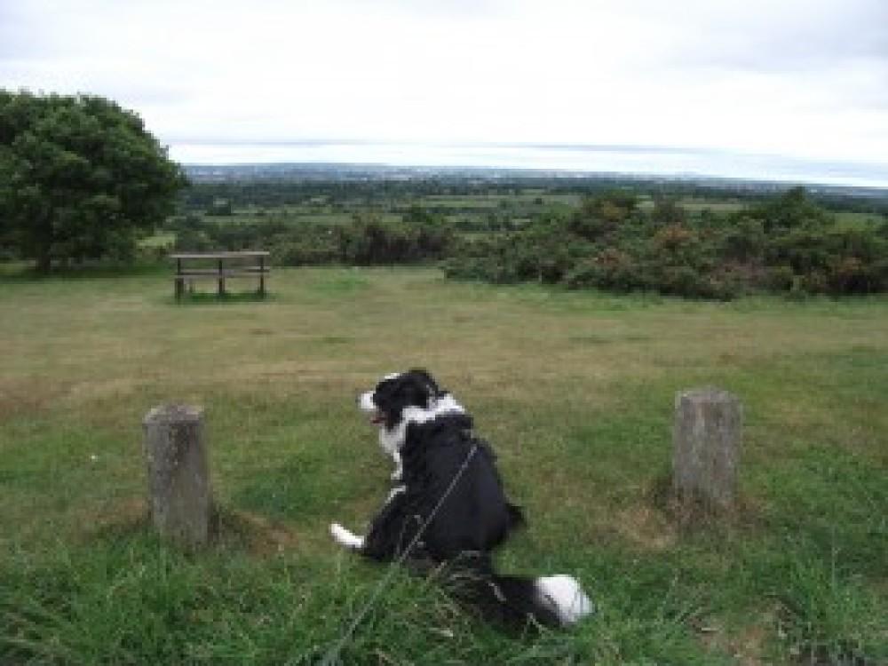Barr Beacon dog walk near Walsall, West Midlands - Dog walks in the West Midlands