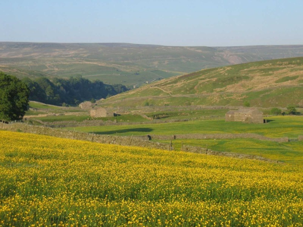 Upper Swaledale dog-friendly pub and dog walks, North Yorks - Image 2