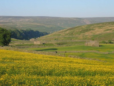 Upper Swaledale dog-friendly pub and dog walks, North Yorks - Driving with Dogs