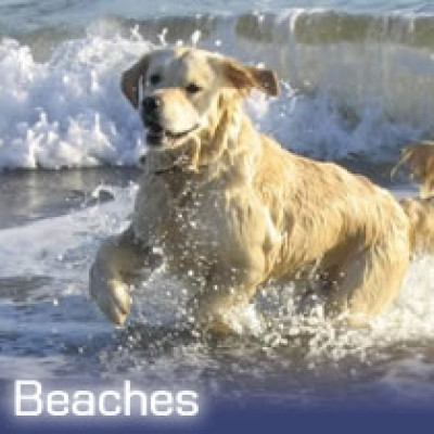 Folkestone Warren dog-friendly beach, Kent - Driving with Dogs