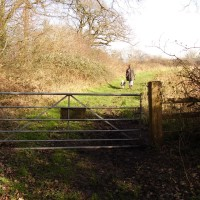 M5 Junction 14 dog walk and farm shop and cafe, Gloucestershire - Dog walks in Gloucestershire