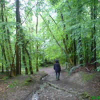 Dog walk in woodland near Ruthin, Wales - Dog walks in Wales