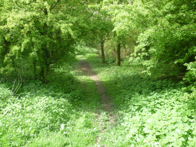 A38 Woodland country park dog walk, Gloucestershire - Driving with Dogs