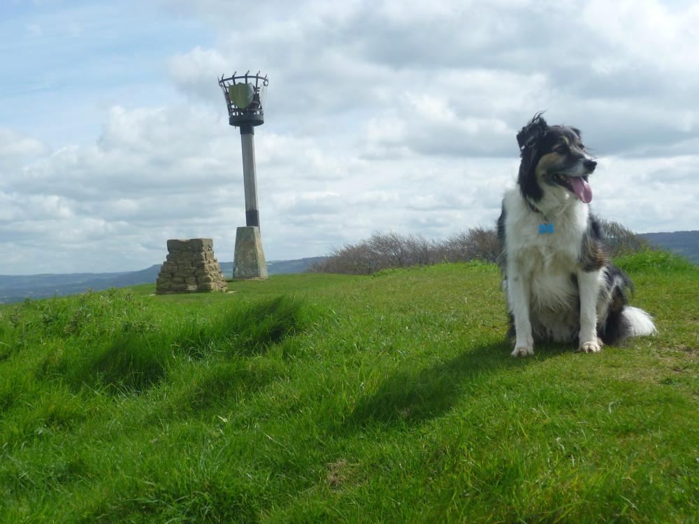 A38 Woodland country park dog walk, Gloucestershire - Dog walks in Gloucestershire