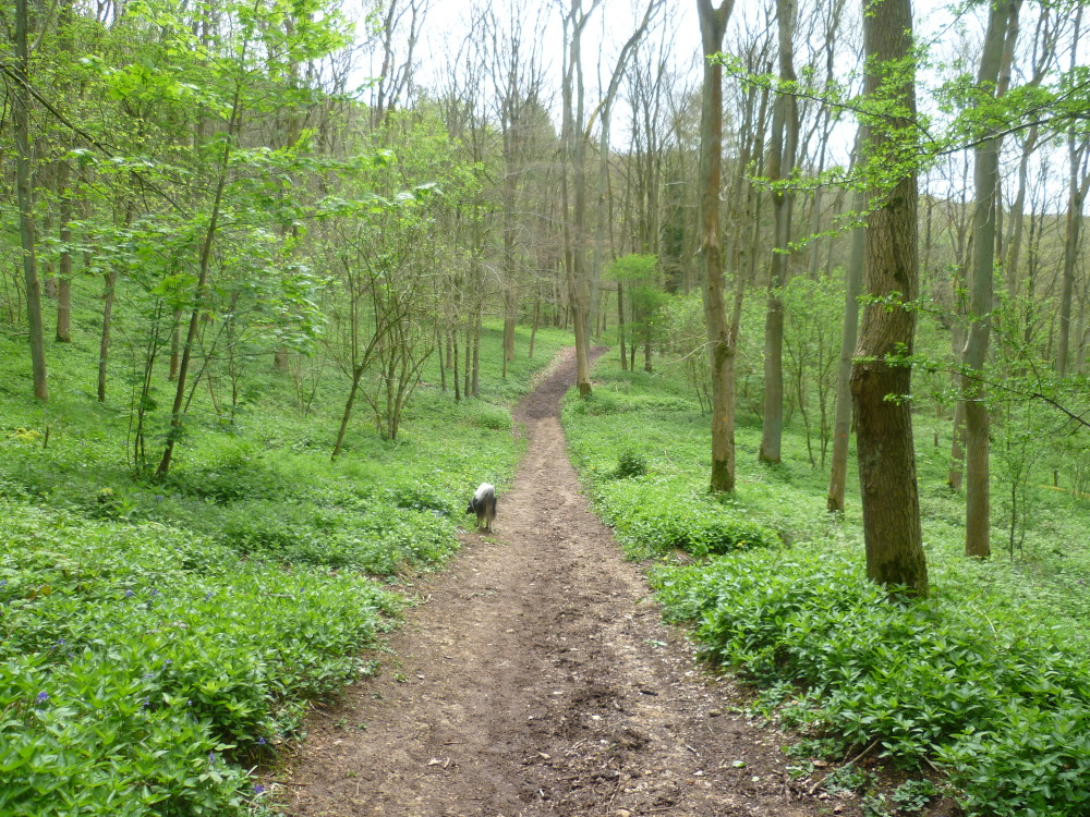 Cotswold dog walk, near Stroud, Gloucestershire - Cotswold dog walk