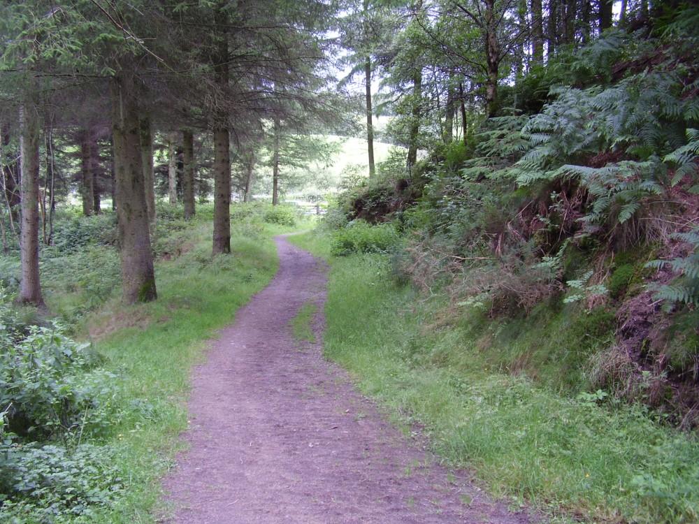 Nercwys Forest dog walk, Wales - Dog walks in Wales