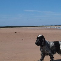 Dog-friendly beach near Dunbar, Scotland