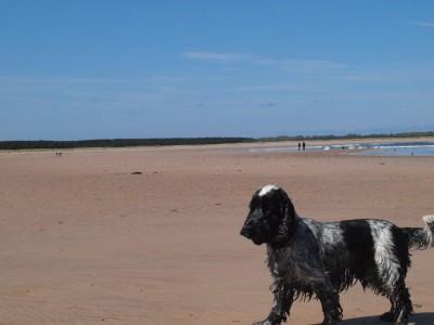 Dog-friendly beach near Dunbar, Scotland - Driving with Dogs