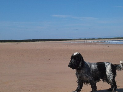 Dog-friendly beach near Dunbar, Scotland - Driving with Dogs