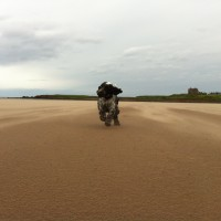 Dog-friendly beach near Dunbar, Scotland - Dog walks in Scotland