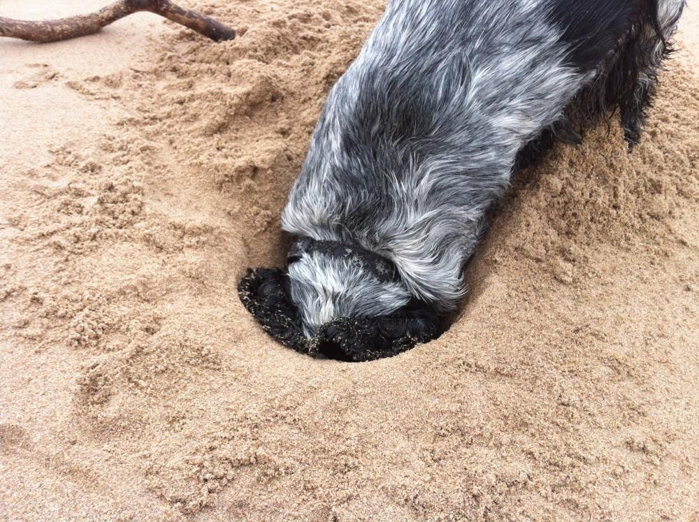 Dog-friendly beach near Dunbar, Scotland - Dog walks in Scotland