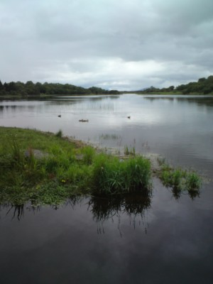 Lough Lannagh dog walk, RoI - Driving with Dogs