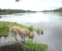 Lough Lannagh dog walk, RoI - Dog walks in Ireland