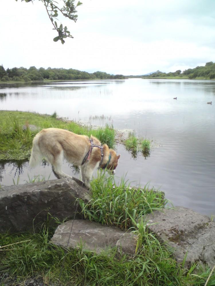 Lough Lannagh dog walk, RoI - Dog walks in Ireland