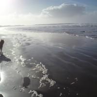 Streedagh dog-friendly beach, RoI - Ireland dog-friendly beach