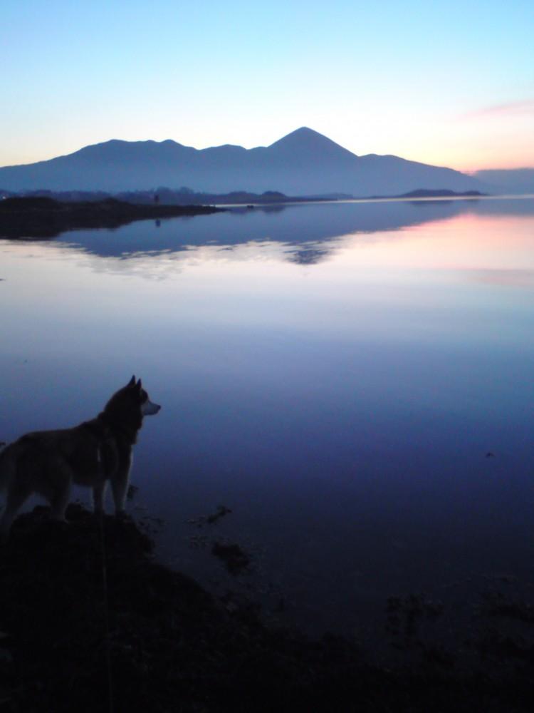 Roman Point dog walk, RoI - Dog walks in Ireland