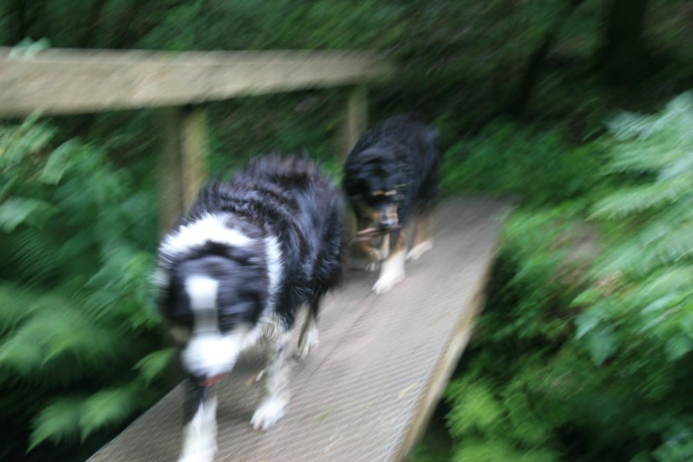 Horner Woods dog walk, Somerset - Dog walks in Somerset