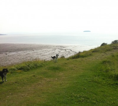 Sand Point dog walk near Weston-s-Mare, North Somerset - Driving with Dogs