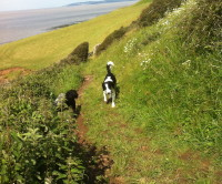 Sand Point dog walk near Weston-s-Mare, North Somerset - Dog walks in Somerset