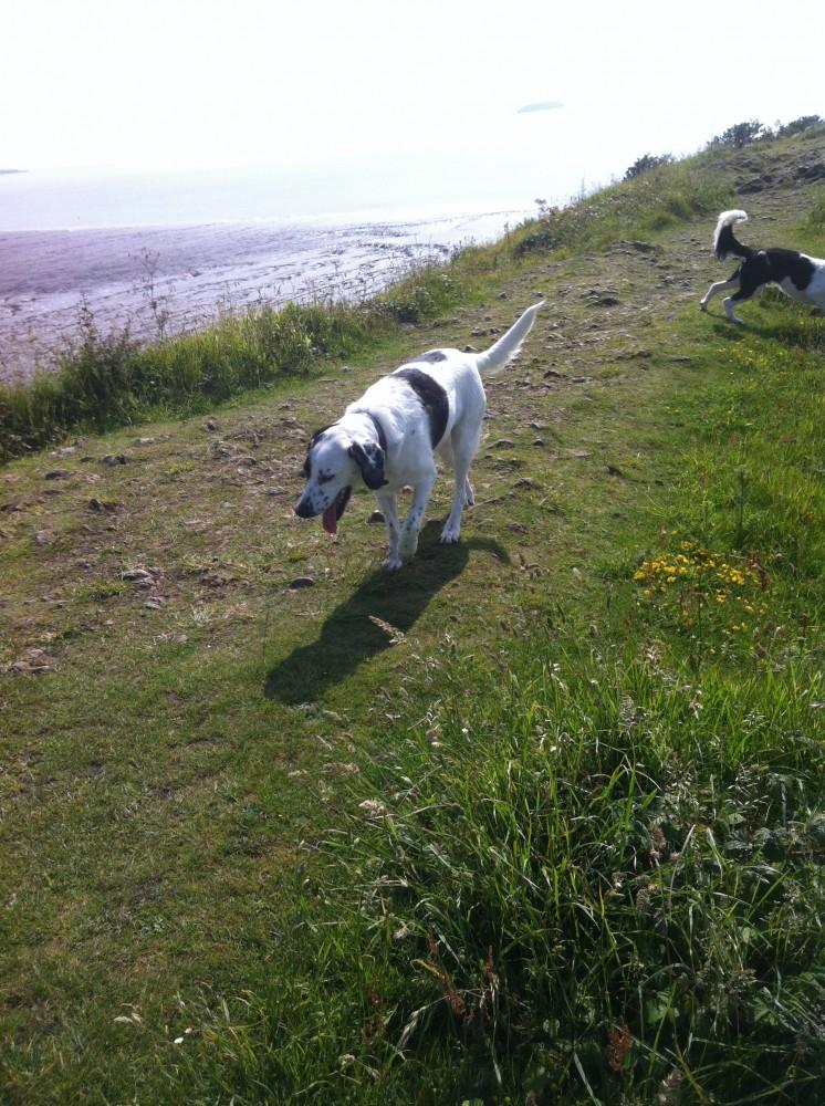 Sand Point dog walk near Weston-s-Mare, North Somerset - Dog walks in Somerset