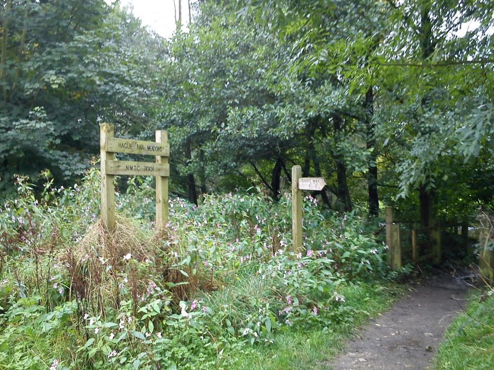 New Mills Mousley Bottom dog walk (via Millenium Walkway), Derbyshire - Dog walks in Derbyshire