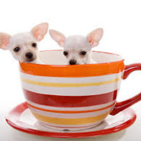 A10 dog-friendly cafe and dog walk, Hertfordshire - dog-friendly cafe.jpg