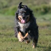 Armadillo Pets, Surrey - Image 2