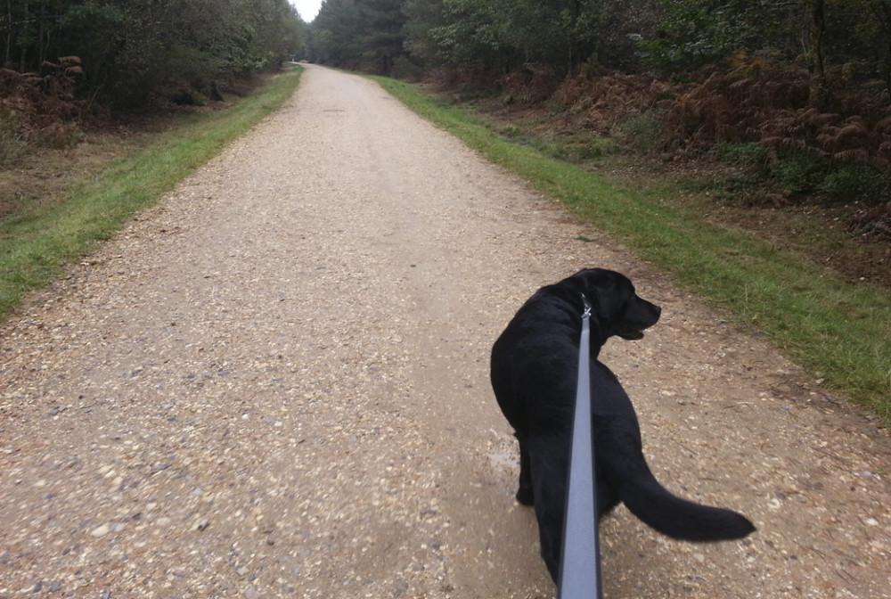 Armadillo Pets, Surrey - Image 3